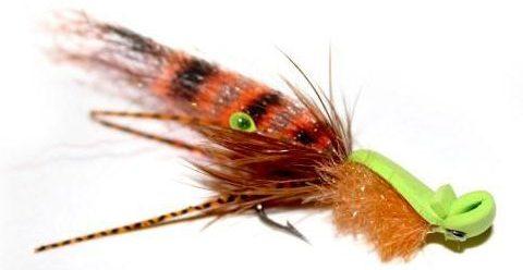 Tiger_Shrimp_Gurgler_700x-e1543504614492.jpg